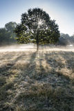 Sun strahlt das Glänzen durch Bäume im Wald auf nebeligem Autumn Fall s Stockfotografie