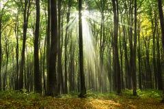 Sun strahlt das Kommen durch die Bäume während eines Herbsttages aus Stockfotos