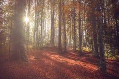 Sun strahlt das Kommen durch die Bäume während eines Herbsttages im Wald aus Stockfotografie