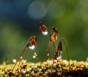 Sun strahlt in den Wassertropfen auf Waldmoos Stockfotografie