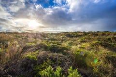Sun strahlt Durchdringen durch schwere Wolken auf ein Feld von Küstensträuchen, große Ozean-Straße, Australien aus Stockbilder