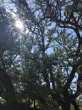 Sun strahlt Hintergrund aus Lizenzfreies Stockfoto