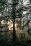 Sun strahlt in nebeligen Wald aus Lizenzfreie Stockfotos