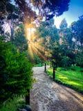 Sun strahlt Strahl durch die Bäume über dem Gehweg am pazifischen Grove-Schmetterlings-Schongebiet, CA aus Lizenzfreie Stockfotos