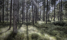 Sun Streaming Through a Beautiful Woodland Scene Stock Photography