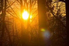 Sun streaming through the branches stock photos