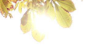 Sun streaming through the leaves stock video footage
