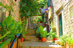 Sun street with flovers, Dubrovnik, south Dalmacia, Croatia. Nice, narrow, and sun street with roses in the middle and with a lot of flowers royalty free stock photography