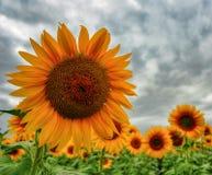 Sun su terra Immagine Stock