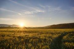 Sun sube sobre el campos de trigo en el bosque Fotos de archivo