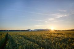 Sun sube sobre el campos de trigo en el bosque Imágenes de archivo libres de regalías