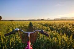 Sun sube sobre los campos de trigo con la bici en el bosque Foto de archivo