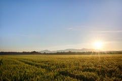 Sun sube sobre los campos de trigo en el bosque Imágenes de archivo libres de regalías