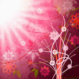 Sun Sunrays Shows Florals Beam And Floral Royalty Free Stock Image