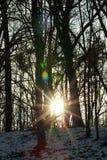 Sun sunrise winter Royalty Free Stock Photography