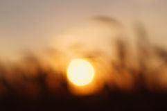 Sun at sunset. Royalty Free Stock Photography