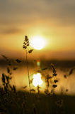 The sun at sunset. Grass on a background sunset stock photos