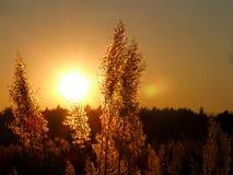 Sun, Sunset, Light, West, Landscape Royalty Free Stock Image