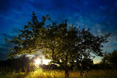 Sun sunset shining through the crown of the tree. Royalty Free Stock Photo