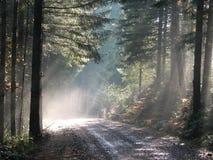 Sun a tacheté la forêt Image stock