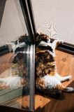 Sun tanning cat Stock Photos