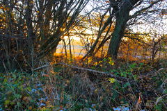Sun in the thicket Stock Image