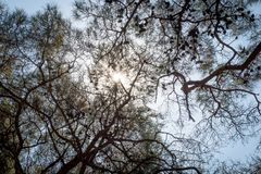 Sun throw dark tree. Blue stock images