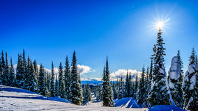 Sun on Top of a Snow Covered Pine Tree on a Ski Hil Stock Images