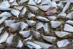 Sun-torkad fisk Royaltyfri Bild