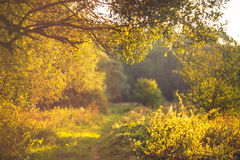 Sun and trail. In forest Stock Image