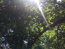 Sun tramite le foglie immagini stock libere da diritti