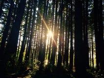 Sun a través de árboles Foto de archivo libre de regalías