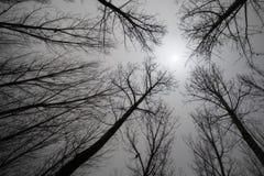 Sun a través de árboles descubiertos Foto de archivo libre de regalías