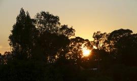 Sun a través de los árboles Foto de archivo libre de regalías