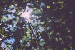 Sun a través de ramas de árbol Imagenes de archivo