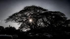 Sun a través del árbol hawaiano fotografía de archivo