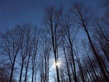 Sun a través del bosque Imágenes de archivo libres de regalías