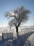 Sun in the tree. Sunrise in the winter landscape Stock Images