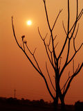 The sun and a tree Royalty Free Stock Photos