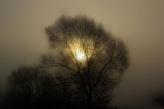 Sun in the tree, foggy morning Royalty Free Stock Images