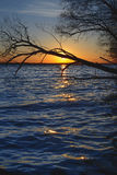 Sun and tree in lake. At sunset Royalty Free Stock Photo