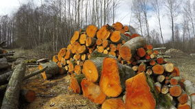 Sun on tree logs, time lapse 4K. Sun shining on freshly cut orange alder firewood by the forest, time lapse 4K stock video footage
