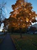 Sun tree stock photo