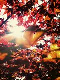 Sun tree. A photo taken from under a tree with wonderful sun rays shining through the leaves Royalty Free Stock Photo