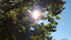 Sun through the tree. Sun shining tree Royalty Free Stock Images