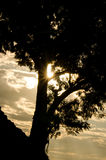 Sun and tree. Sun shining through tree branches Stock Images