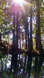 Sun tree. Sun shining through the trees Stock Photography