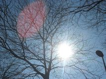 Sun in tree Royalty Free Stock Images