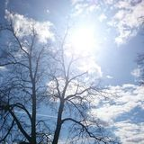 Sun. Tree sky Stock Image