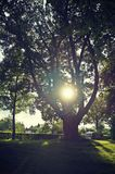 Sun in the tree Stock Photos